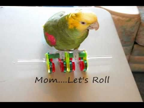 8 Best Funtime Birdy Youtube Videos Images On Pinterest