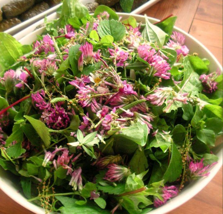 rikkaruohosalaatti, salaattia maitohorsmasta, puna-apilasta, piharatamosta, voikukasta sun muista rikkaruohoista