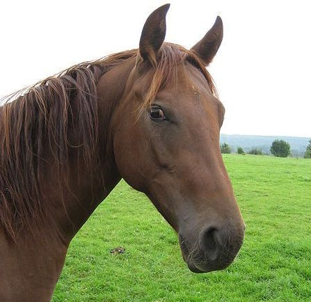 Animal Heroes: Kerry The Horse  ... from PetsLady.com ... The FUN site for Animal Lovers