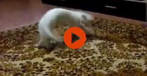 Funny dancing cats and dogs #Funny#Cute#Cats#Dogs#Adorable#Animals