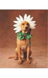 Our Little Flower!!! - I would love to do this with Bailey.