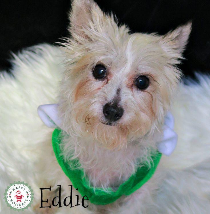 Eddie, Christmas 2017