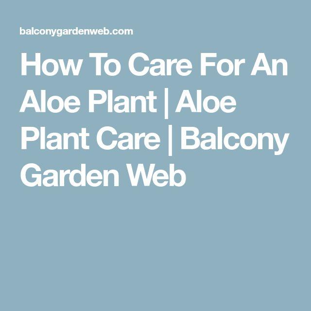 How To Care For An Aloe Plant   Aloe Plant Care   Balcony Garden Web