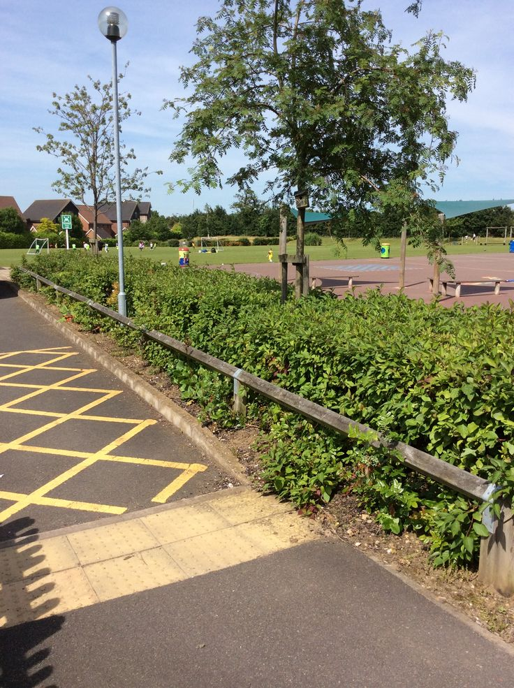 Before, area of bushes at the edge of the playground.