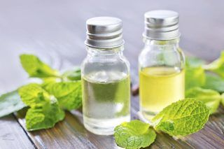 How to Make Oil From Fresh Peppermint (8 Steps) | eHow