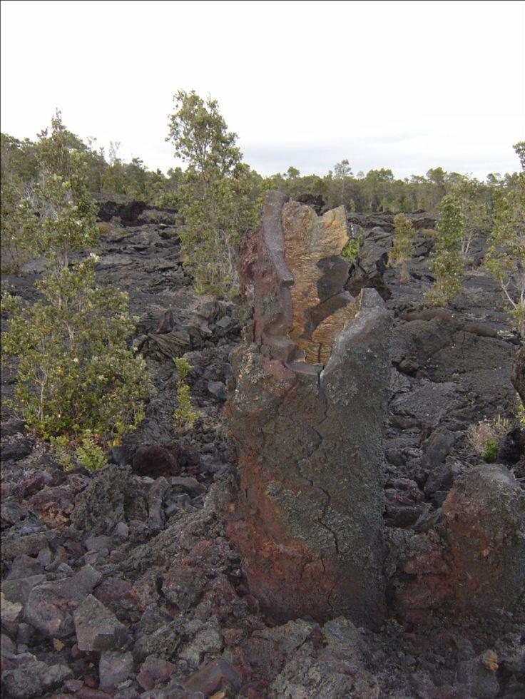 USA, Lava cast of tree trunks, Big Island, Hawaii