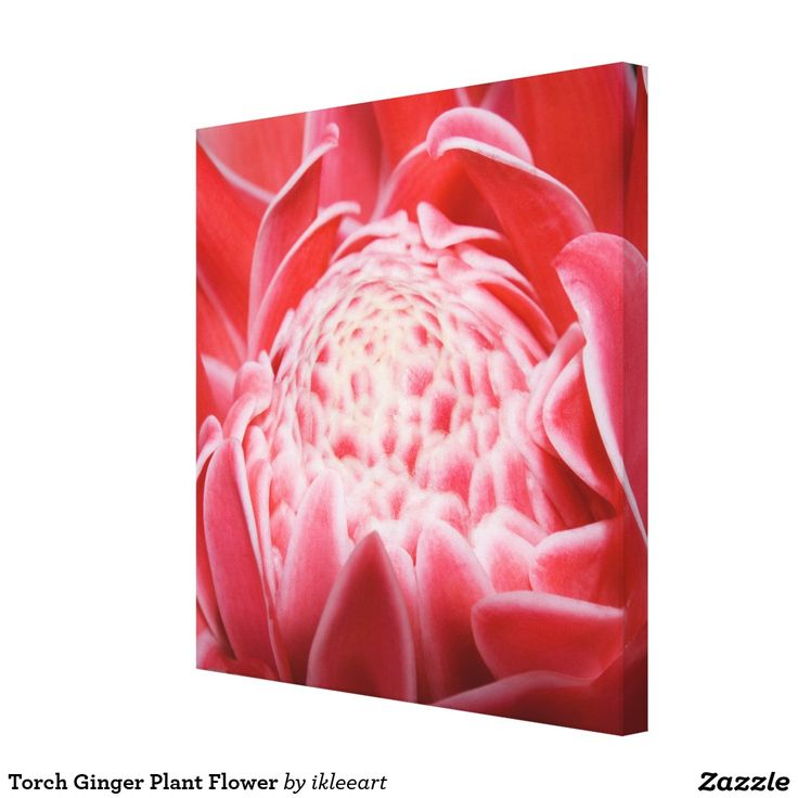 Torch Ginger Plant Flower Canvas Print