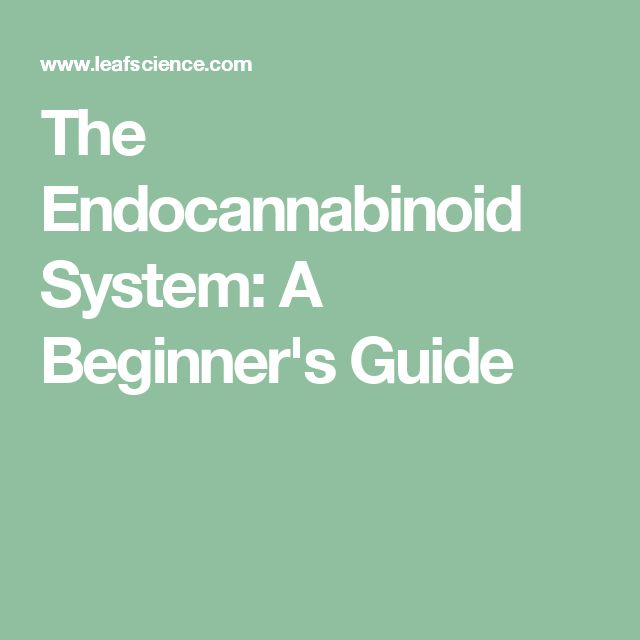 The Endocannabinoid System: A Beginner's Guide
