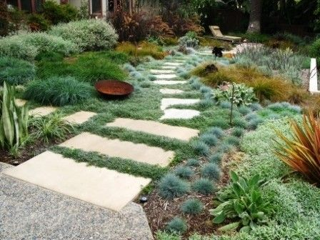 No mow garden path through succulents and grasses