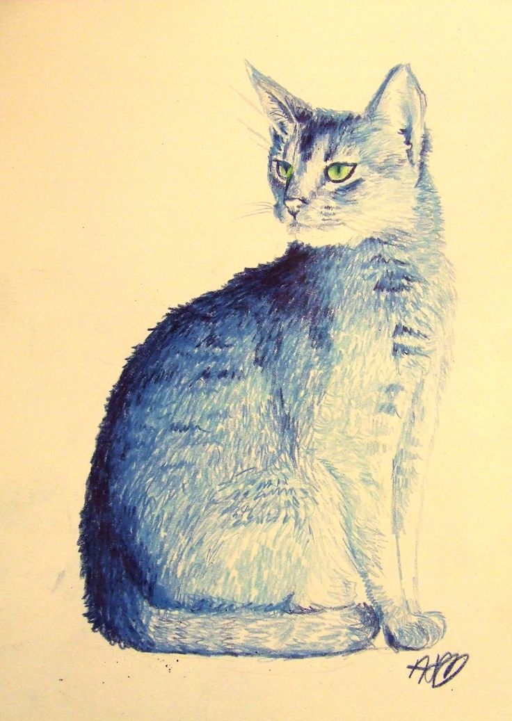 Blue cat with colour pencils