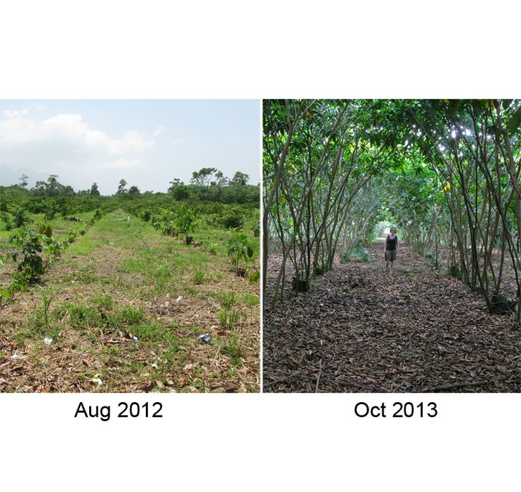 So before we posted a picture shpwing the difference 5 months had made - now look at what 14 months has done! The site is transformed from grass to a forest of Inga.