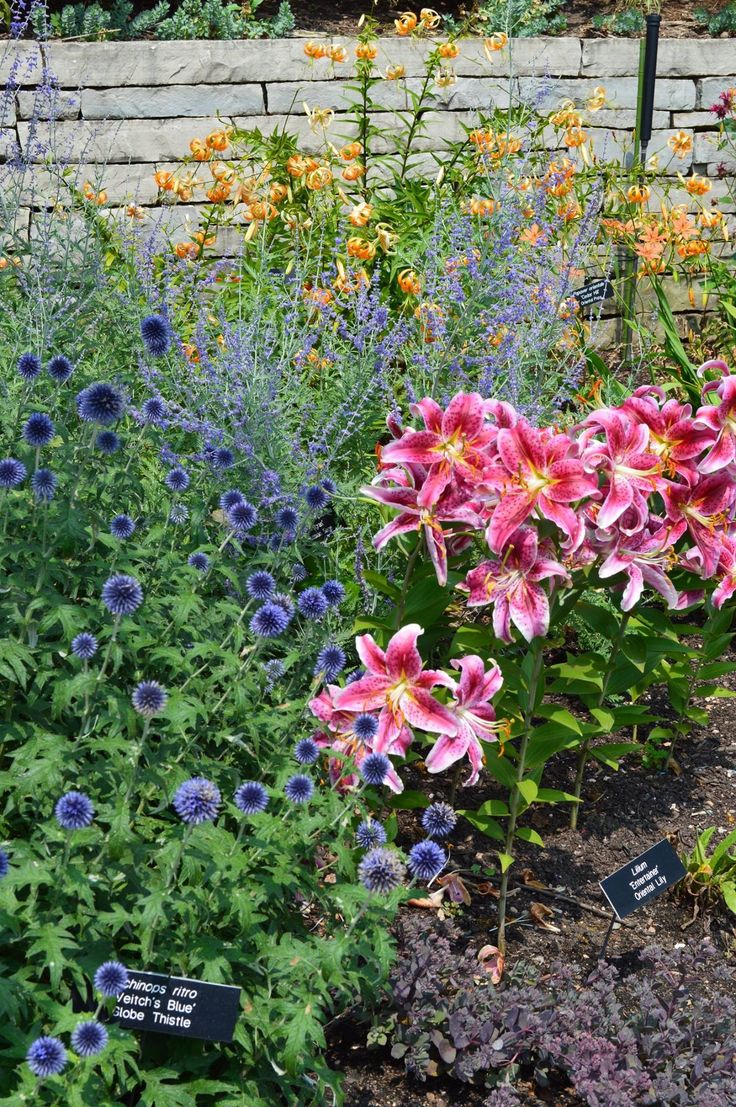 1000+ Images About Garden Flowers In Minnesota On