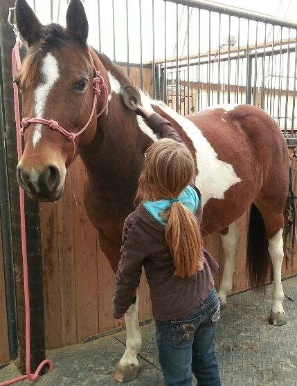 Teaching a new horse owner all about horse ownership, health care, riding, grooming in Horses for New Owners.
