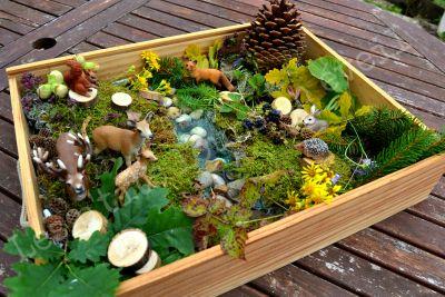 Ce matin, petite balade dans les bois où nous avons trouvé des trésors (mousse, feuilles, mûres, noisettes, petites fleurs...) Et cet après-midi, petit bac sensoriel sur le thème de la forêt avec sa rivière! Pour créer ce décor, J'ai rempli le bac de...