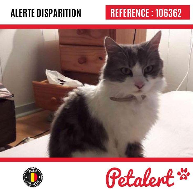 27.04.2017 / Chat / Bruxelles Uccle / Bruxelles / Belgique