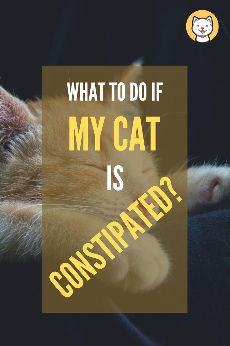 Pin On Kitty Cats Blog