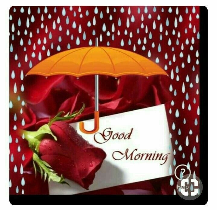 Surprise Good Morning Greetings Good Morning Rainy Day Morning Greeting