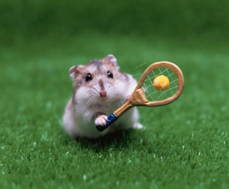 This is the kind of hamster I would like to have as a pet!