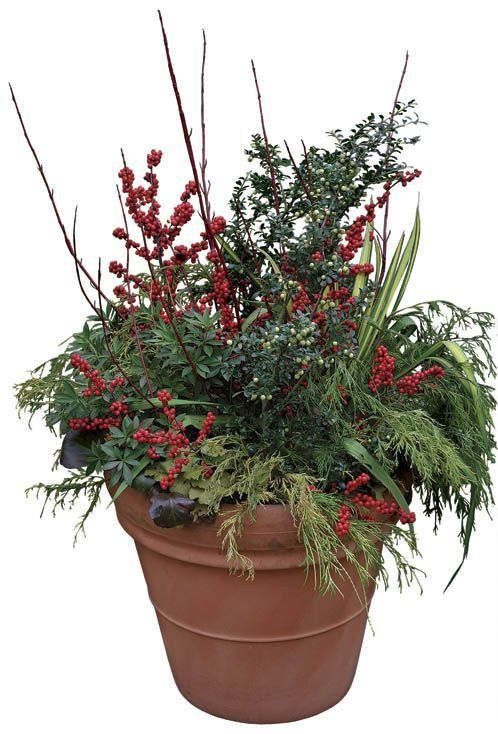 17 best images about winter containers on pinterest planters hanging baskets and outdoor - Winter container garden ideas ...
