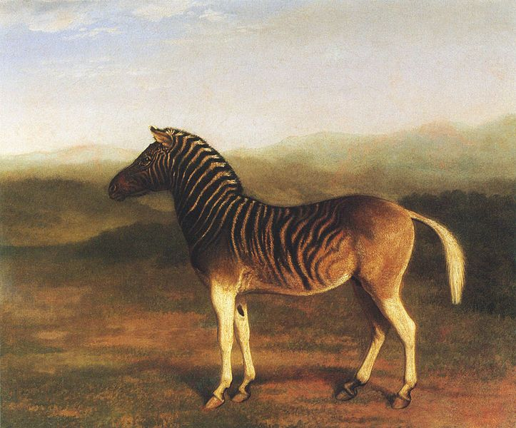 Quagga, now extinct