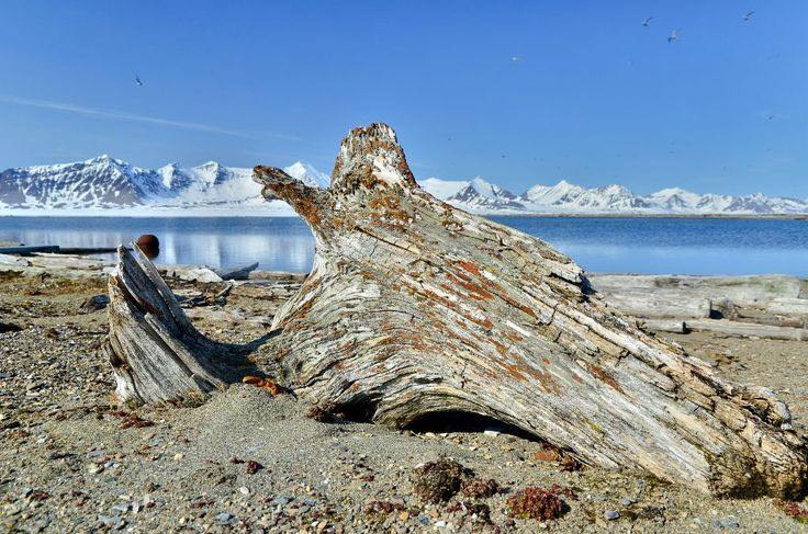 DSC0132 Spitsbergen Prins Karls Forland Poolepynten drijfhout 120611.jpg - Spitsbergen - Prins Karls Forland is een smalgerekt eiland voor d...