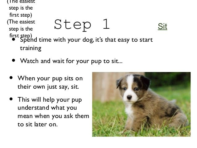 Image Result For How To Train Your Dog To Sit Training Your Dog