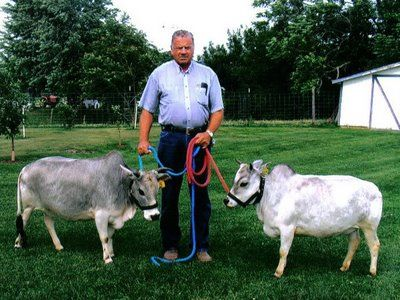 WHAT THE HECK! MINI COWS ARE REAL!!! I WANT ONE! Renewable energy..after it eats on the lawn all summer we can butcher.. mini steaks!