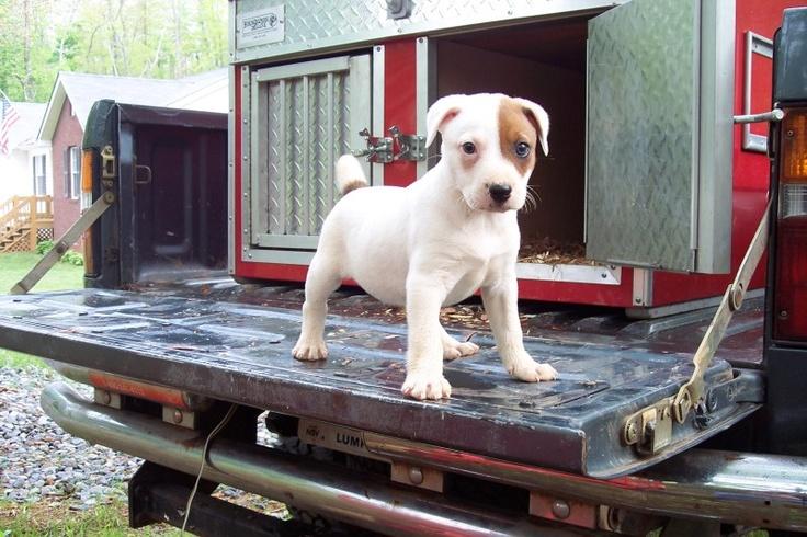 Feist Dog Kennels