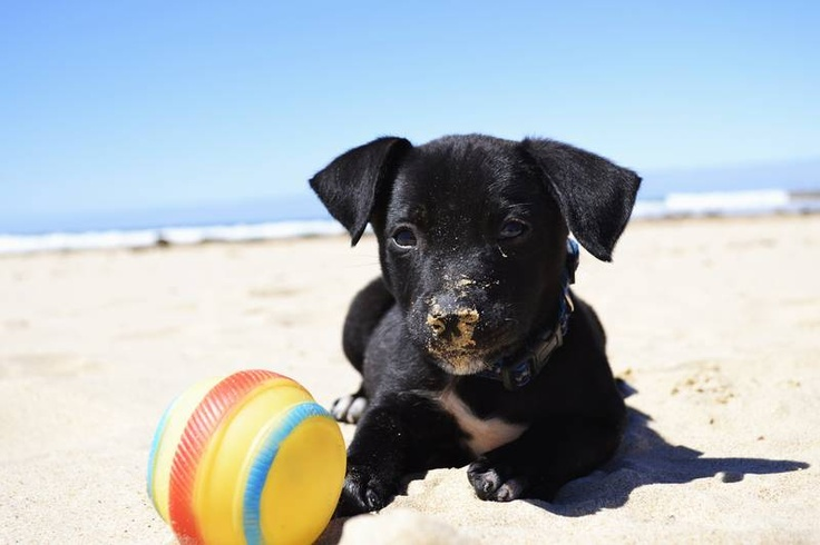 Mixed breed puppy needs a home. Oh how I want him. #puppy #sydney