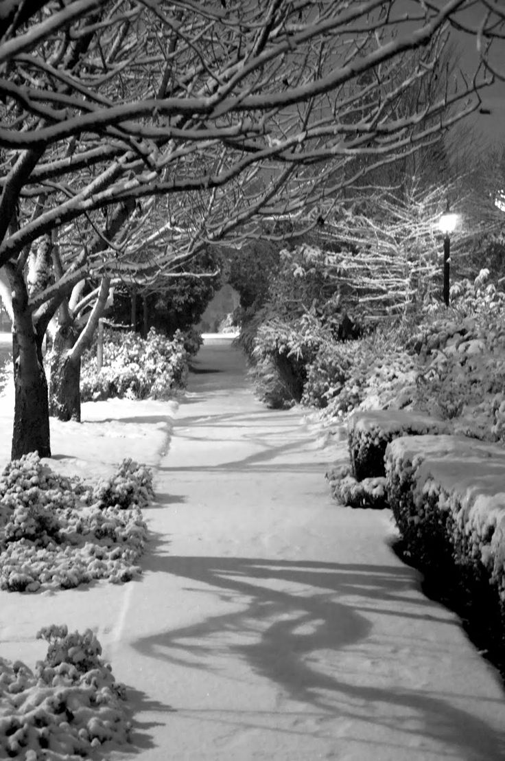 This snowy paradise reminded me of Thanksgiving, 1979, in Denver, CO. I was in the Air Force & had just made Thanksgiving dinner for my Marine friends. The snow was coming down heavy & there was not a soul on the street. We walked down the middle of the street, sharing life stories while listening to the crunching of the snow beneath our feet. It was a 'Silent Night' that created one of my memorable AAAhhh... moments in my life. Love it!