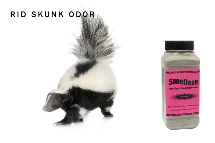 15 Best Ideas About Skunk Smell Remover On Pinterest