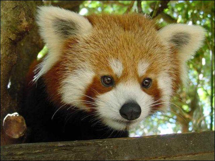 Wellington Zoo Reviews : Wellington places to visit