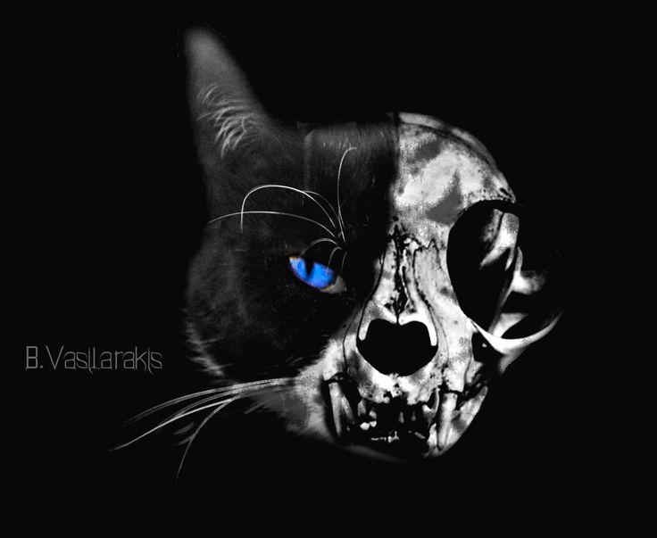 Cat half Skull