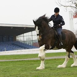Shire Horse Society Spring Show 2012<br />  Jane Kirk and Roy Greenwood's Gairloch Challenger ridden by Adele Hanson<br />  Ridden Champion at the Spring Show 2010, 2011 and 2012