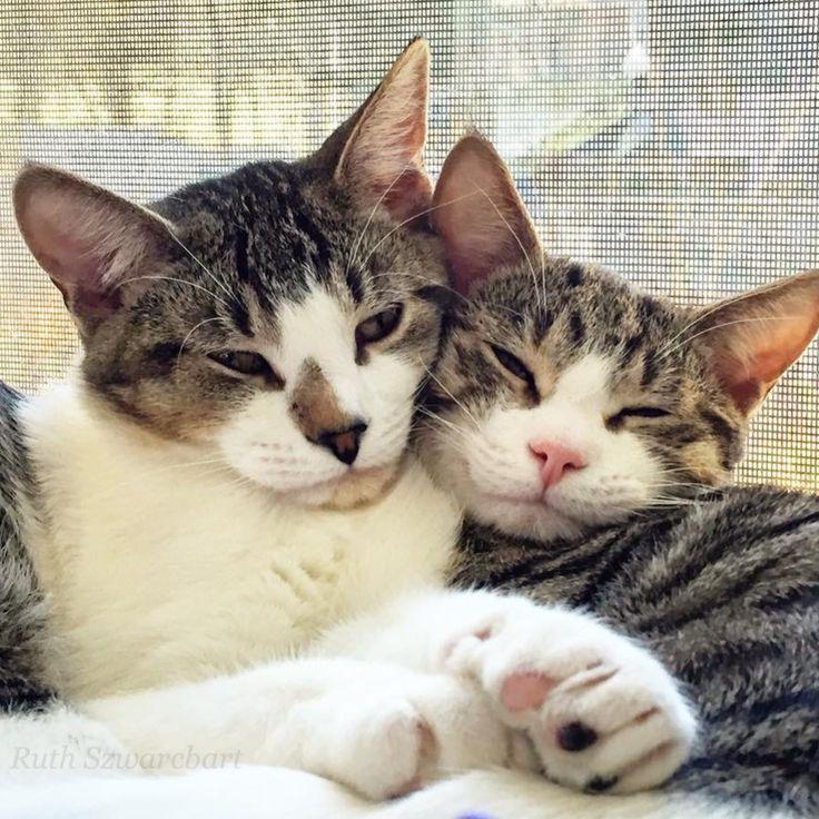 Darwin & Nobel  Gifford Cat Shelter - Brighton, Massachusetts.