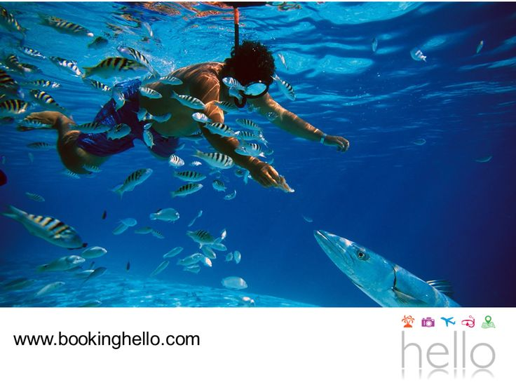 LGBT ALL INCLUSIVE AL CARIBE. La Riviera Maya es una de las zonas preferidas para hacer turismo, ya que está rodeada de selva y hermosas playas donde se pueden disfrutar múltiples atracciones. Las actividades acuáticas predominan en este lugar y puedes elegir entre hacer recorridos en kayak, practicar buceo o hacer snorkeling, entre otras. En Booking Hello te invitamos a disfrutar de nuestros packs all inclusive en el resort Catalonia Riviera Maya, para complementar tu viaje de la mejor…