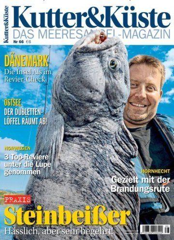 #Steinbeißer: Hässlich, aber sehr begehrt 🎣  Jetzt in Kutter & Küste:  #Angeln #Meeresangeln #Fischerei #Fisch