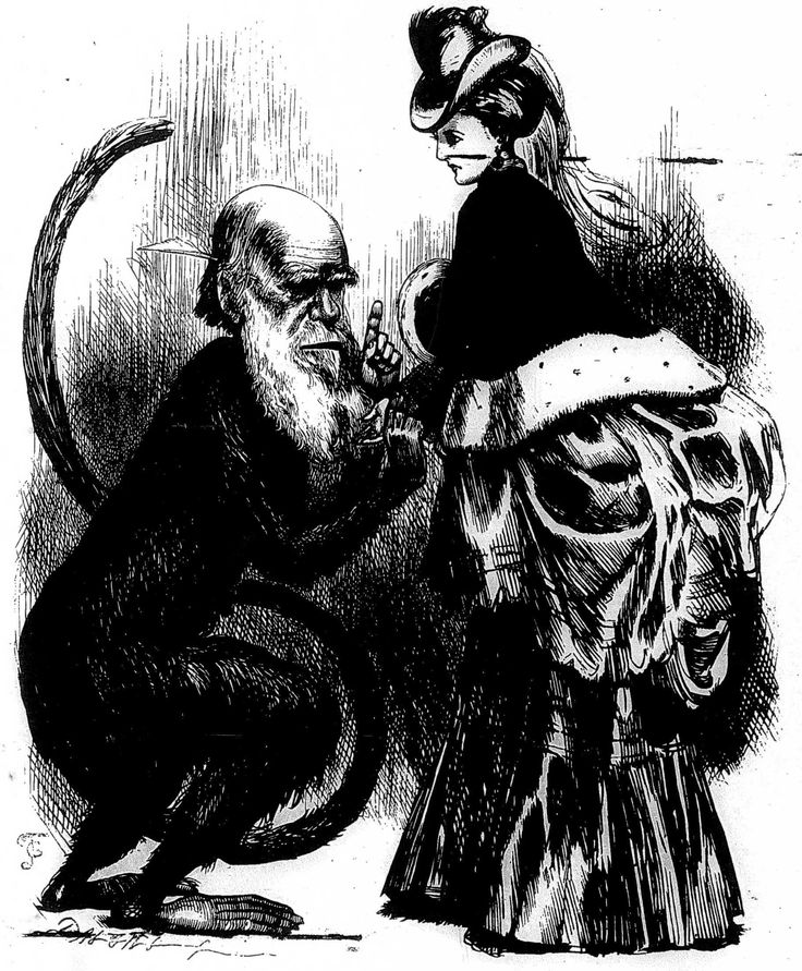 One of the many contemporary cartoons and caricatures casting Darwin as a monkey or an ape. Note the phallic and serpentine quality of Darwi...
