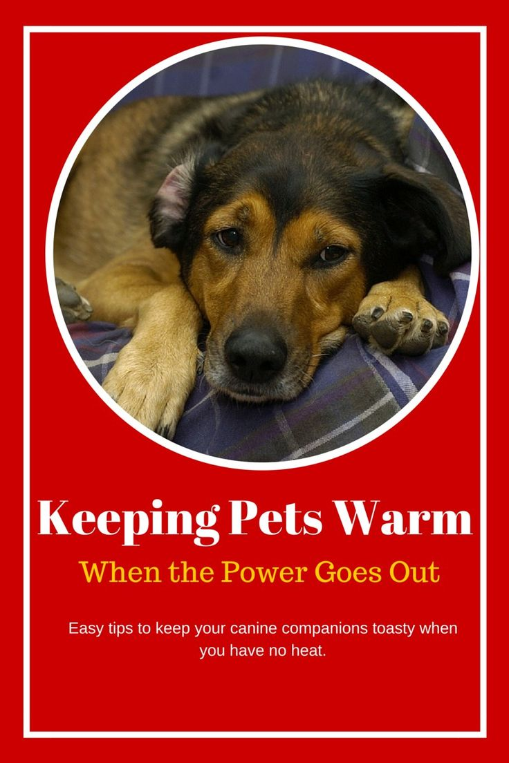 Keeping pets warm when the power goes out is challenging, especially when you're trying to keep yourself warm! Check out our easy tips for keeping you and your pets more comfortable until the lights come back on.