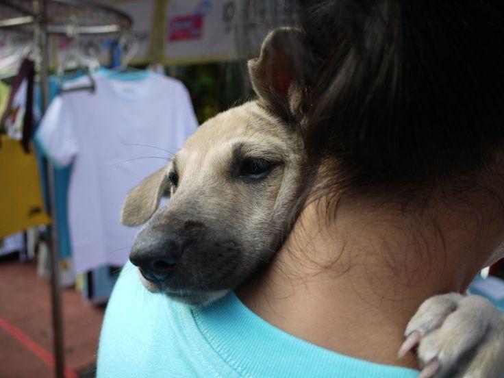 Best People Hugging Animals Images On Pinterest Dog Stuff - 25 heartwarming moments animals hugging
