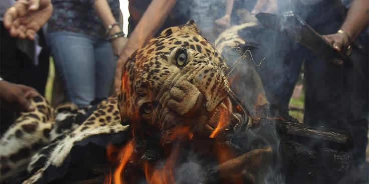Lahey'de Uluslararası Hayvan Hakları Mahkemesi kuruluyor https://gaiadergi.com/laheyde-uluslararasi-hayvan-haklari-mahkemesi-kuruluyor/