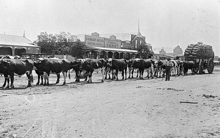 A bullock team in the main street of Rainbow in 1905. In the background, the Rainbow Argus printing office and Skendall Chemist.