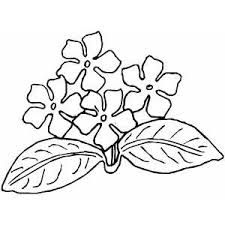 african violets coloring page