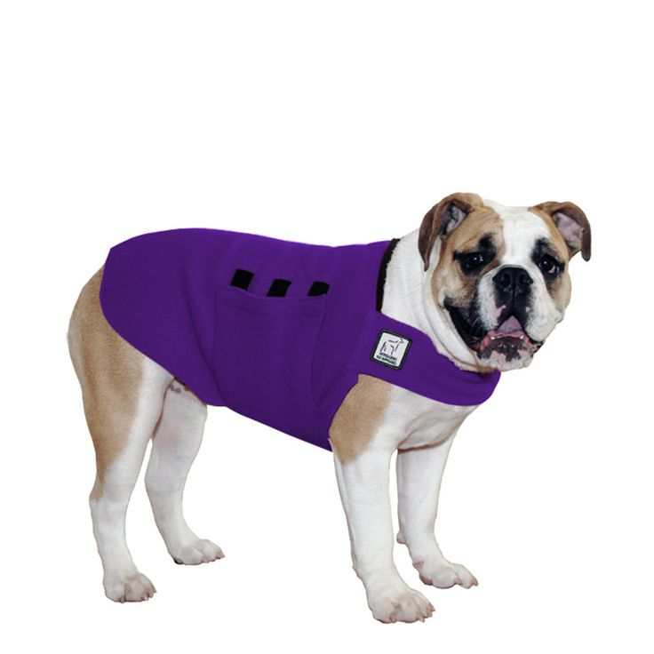 Purple English Bulldog Dog Tummy Warmer, great for warmth, anxiety and laying with our dog rain coat. High performance material. Made in the USA.