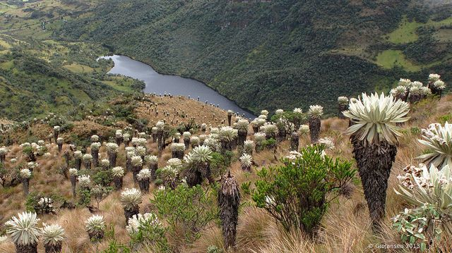 Colombia. Páramo de Ocetá, Laguna Negra