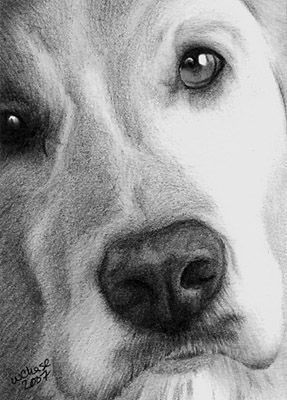 25+ best ideas about Graphite Drawings on Pinterest | Pencil ...