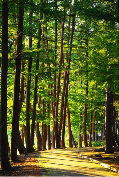 Nice Forests from $34.99 | www.wallartprints.com.au #ForestPictures #LandscapePhotography