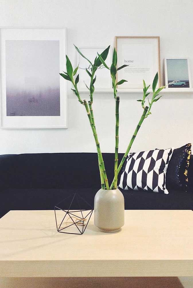 Bambu Da Sorte Como Cuidar Dicas E Ideias De Decoracao Bambu