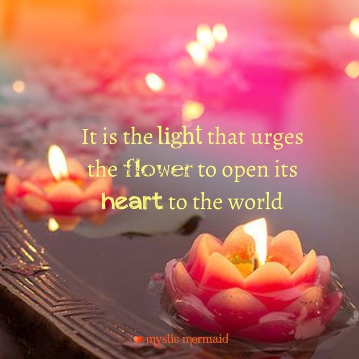 25 best ideas about lotus flower quote on pinterest