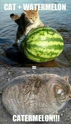 Cat + watermelon? What comes next dog + cantaloupe?